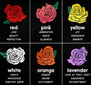 Color Of Rose Means Different Things