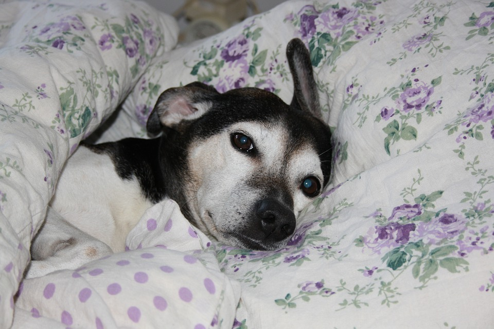 Is A Good Dog Bed Necessary? Check Out The Importance Of It!